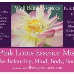 Pink Perry Slocum Lotus Mist.